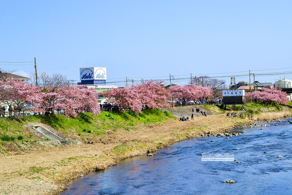 日本賞櫻,日本河津櫻,賞櫻景點