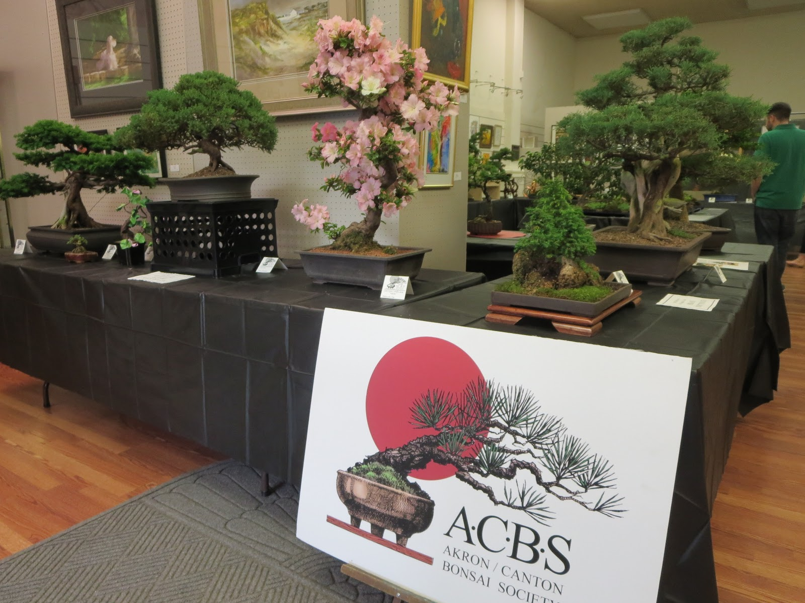 Akron Canton Bonsai Society
