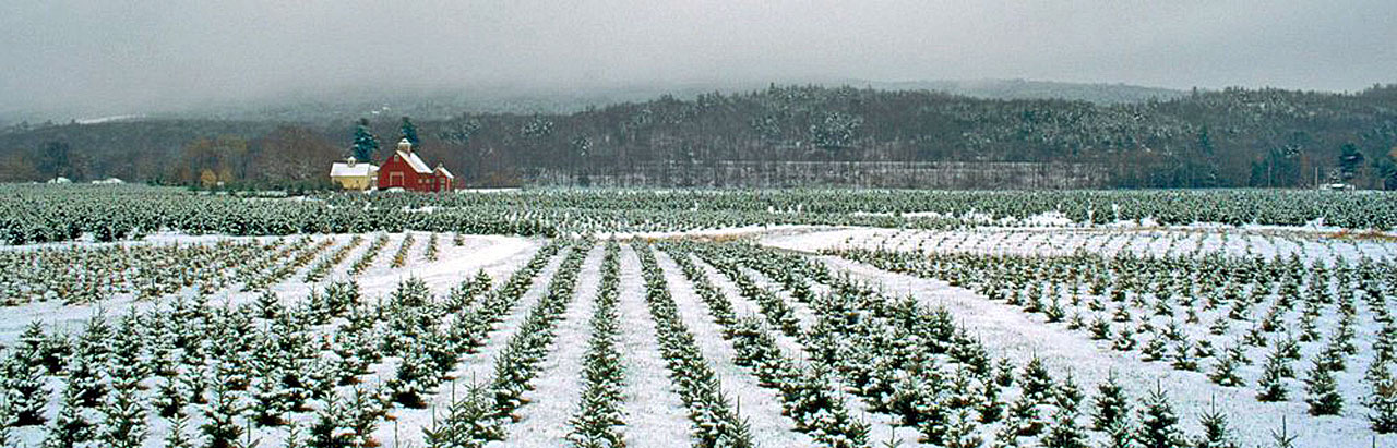 Springfield Vermont News: This Christmas Farm in ...