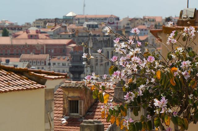 Quartier de la Mouraria-Lisbonne-Portugal