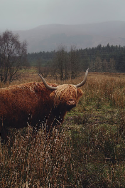 super promocje Data wydania szczegółowe zdjęcia Wełniane myśli: Wyspa Skye. Szkocja.