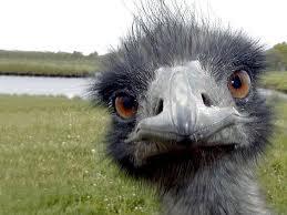 ostrich+1.jpg