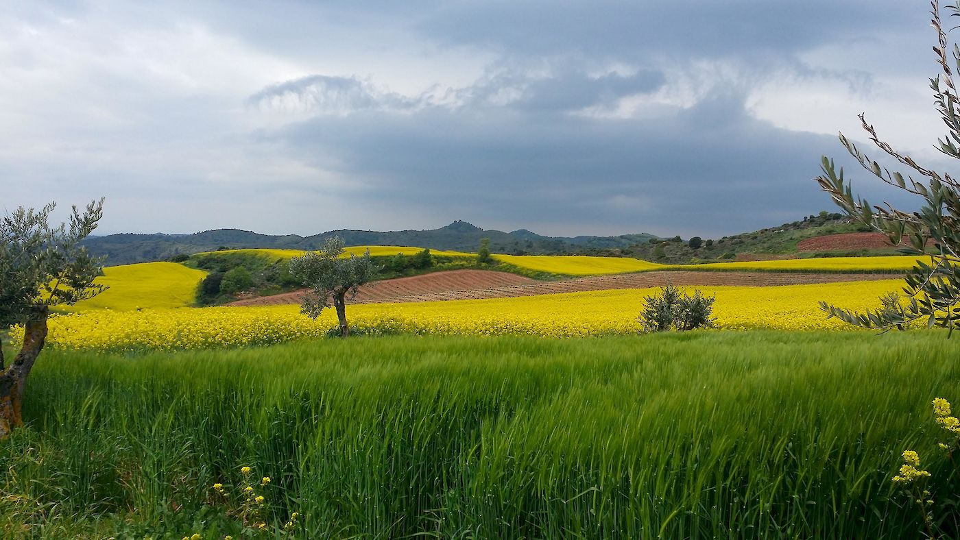 With the impending storm approaching quickly along these early stages of the Camino, Authentic Journeys' owner captured this magnificent image. Photo: © Authentic Journeys.com. Unauthorized use is prohibited.