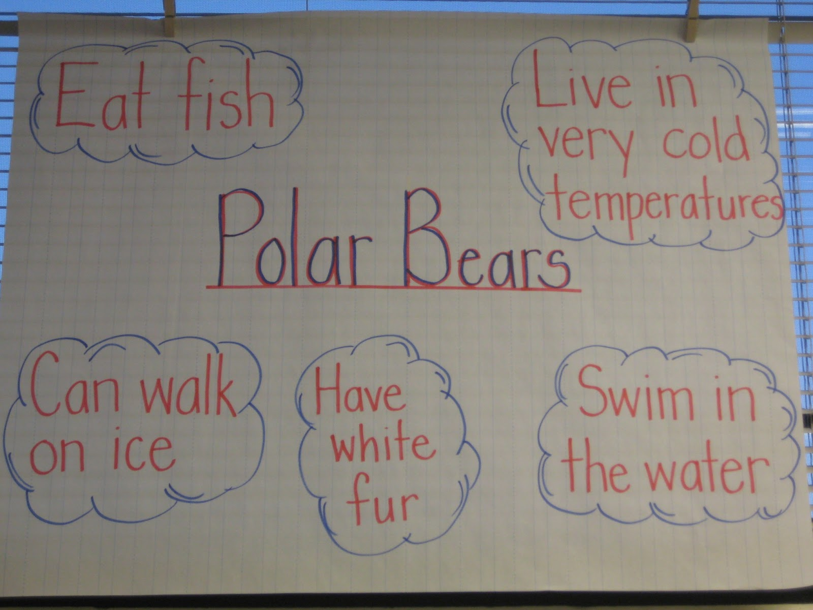 The Kindergarten Pod Arctic Animals Unit