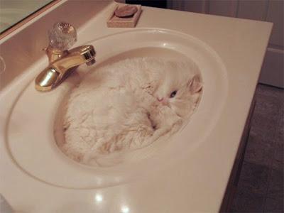 Gato camuflado con lava manos
