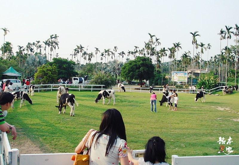 綠盈牧場|嘉義中埔親子景點|食尚玩家推薦