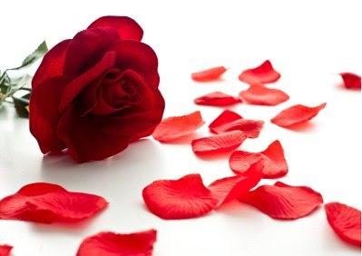 lu tudo sobre tudo tonico de petalas de rosas