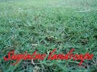 Tukang-rumput-swiss-gambar-rumput
