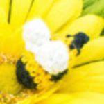 http://mycreativeblog.com/teeny-tiny-bumblebee/