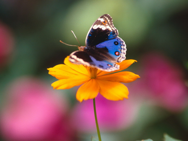 Free Wallpapers: Small And Cute Butterflies HD Wallpapers