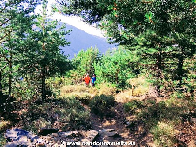 Pinos subiendo al Mulhacén desde Trevélez