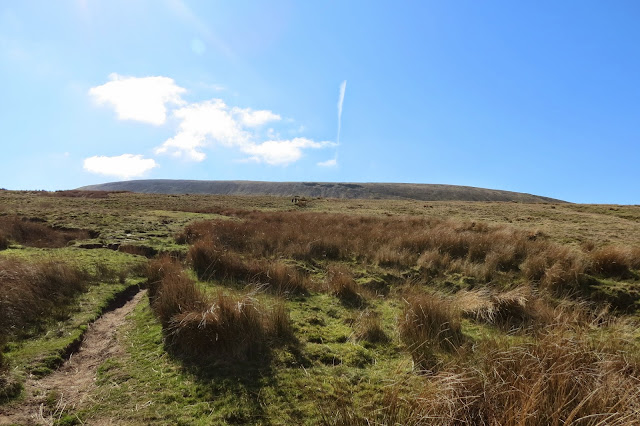 A stretch of moorland, green grass and rushes, with Pendle Hill lying low across the background.