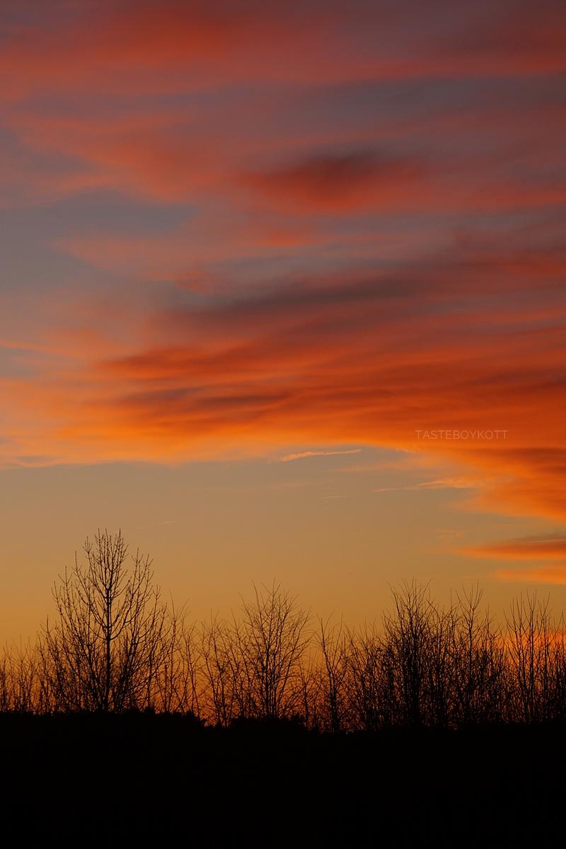 Vibrant sunset in January | Tasteboykott