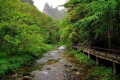 ลำธารแส้ทอง (Golden Whip Stream) @ www.bestzhangjiajie.com