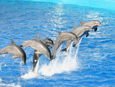 Fotografia de delfines en espectaculo  [17-7-20]