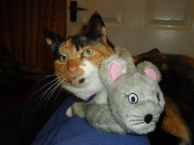 Willow the Cat with Mouse Ear Muffs