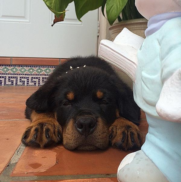 21 chú chó bướng bỉnh mãi mà chẳng chịu lớn
