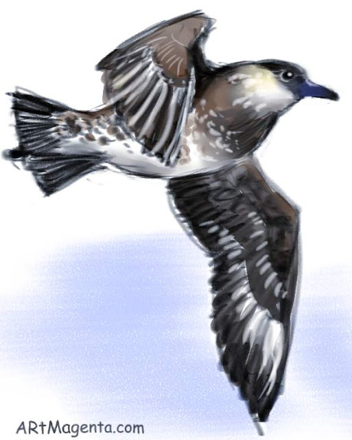 Arctic skua sketch painting. Bird art drawing by illustrator Artmagenta.