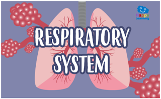 https://happylearning.tv/en/word-search-respiratoy-system/