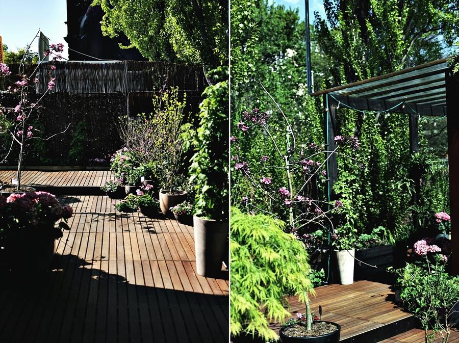 schrebergarten grün wohnen in berlin wohung günstig