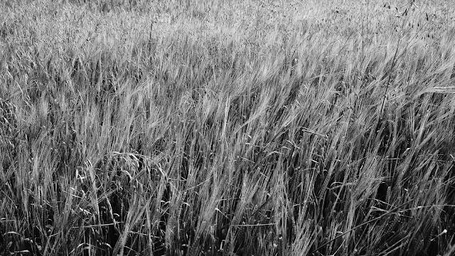 Słowackie pola. Tatry, Pieniny, Słowacja. Fotografia krajobrazu. fot. Łukasz Cyrus