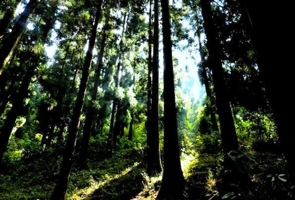 Numberfour 10 Hutan Angker Menyeramkan Dunia Gambar