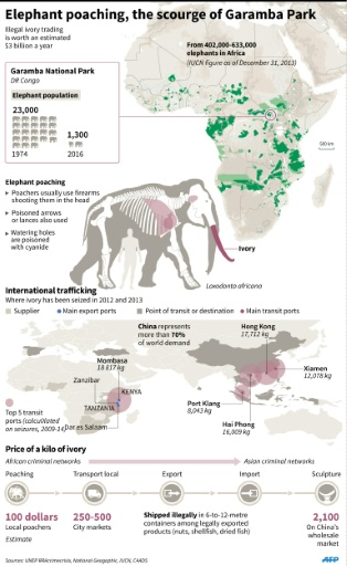 Saving the wildlife 'miracle' of Congo's Garamba park