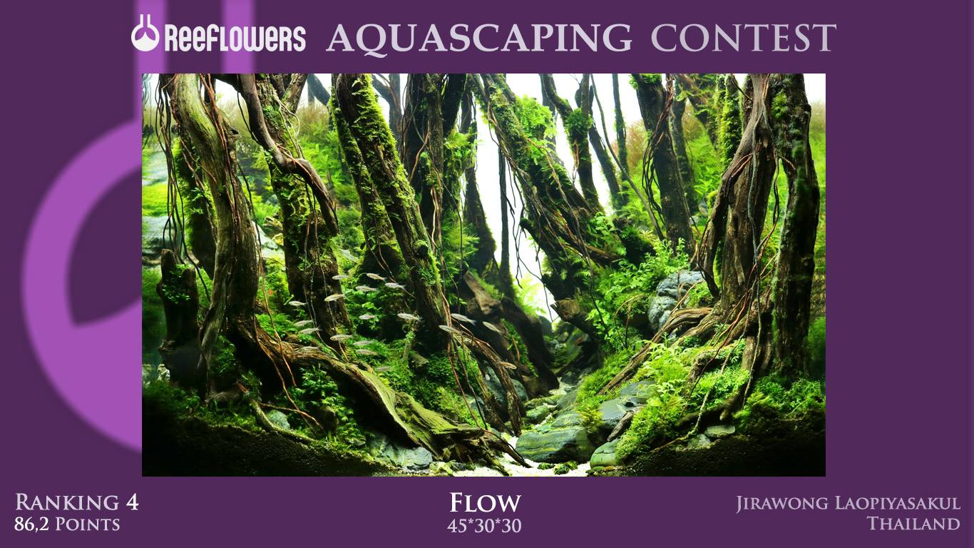Cuộc thi thủy sinh Reffflowers Aquascaping Contest 2017 - hạng 3