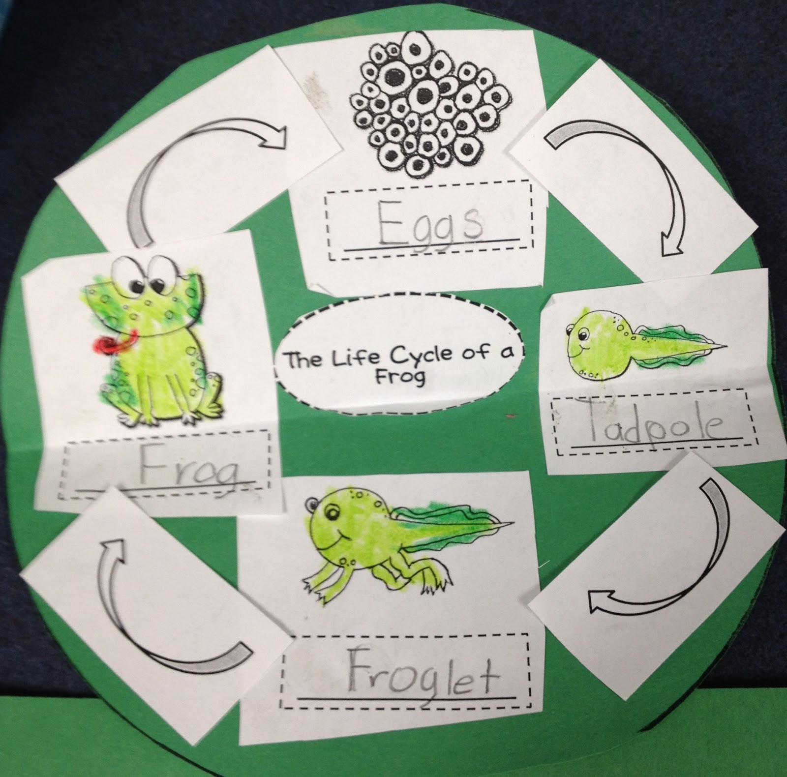 Firsties Rockin The Mullett Frog Life Cycle Craft And