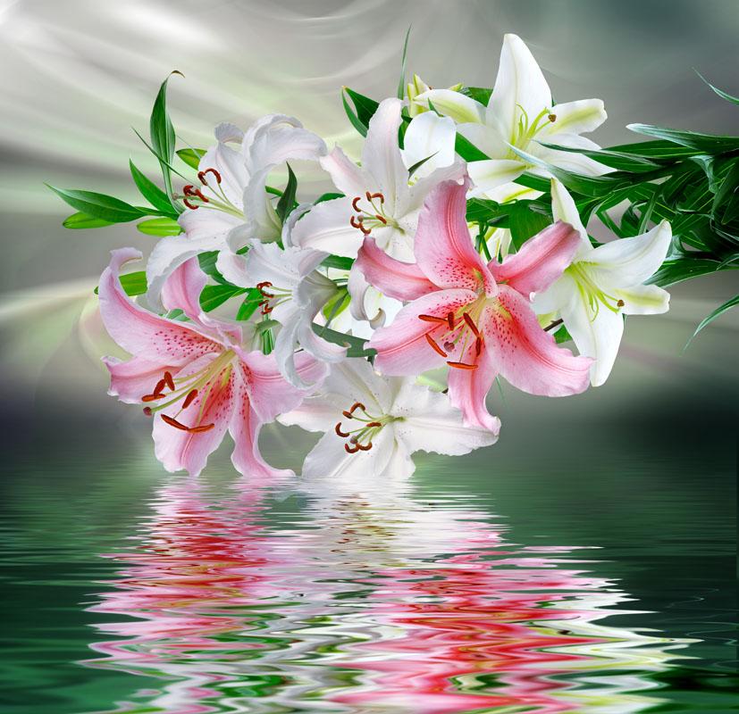 Заказать цветы лилии