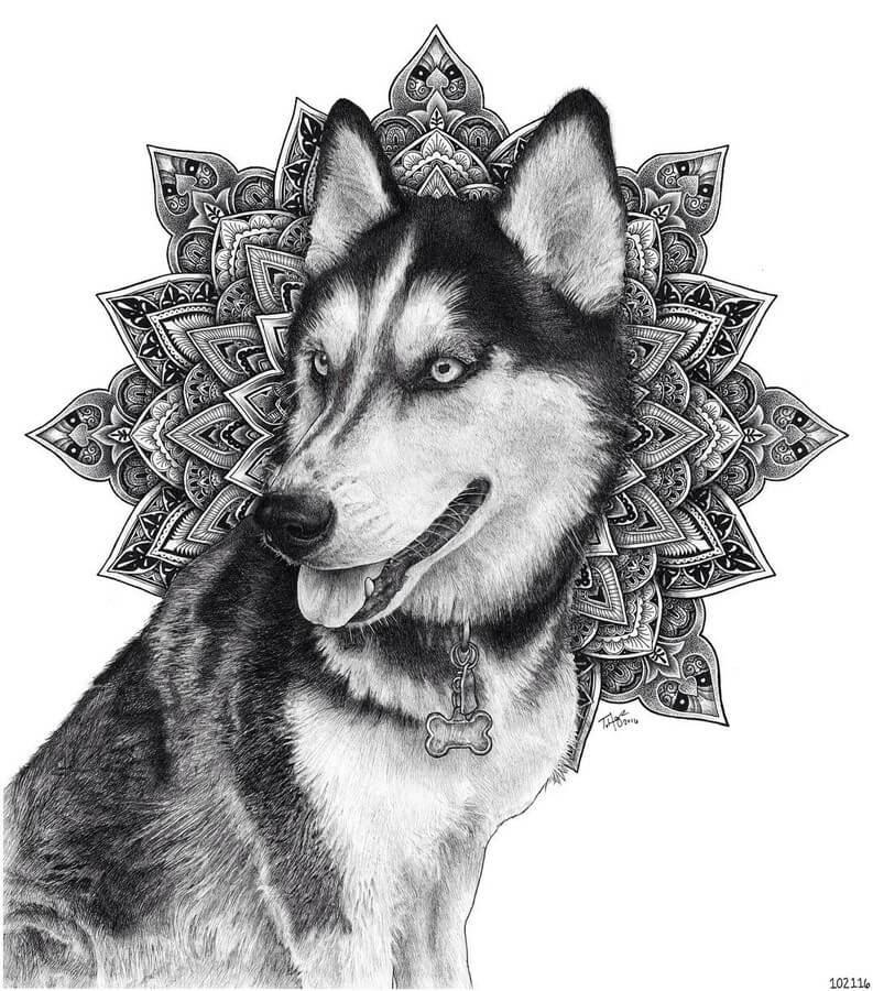 02-Siberian-Husky-and-Mandala-Tyler-Hays-www-designstack-co