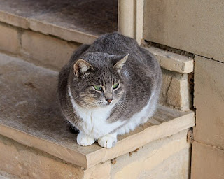 A cat from the Monastery of St. Nicholas of the Cats. Photo © A.Savin, Wikimedia Commons.