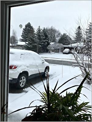 March 30, 2019 In shock as we woke to snow!
