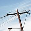 electrcity pole