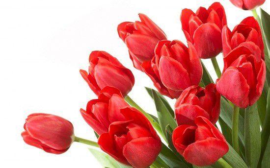 hình ảnh hoa đẹp nhất thế giới 13