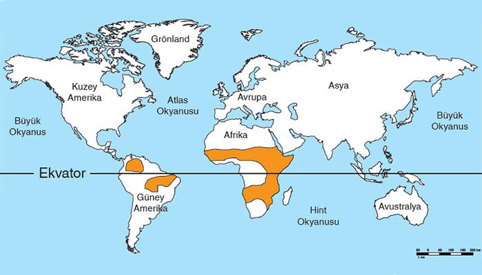 Savan İklimi Kısaca Bilgi