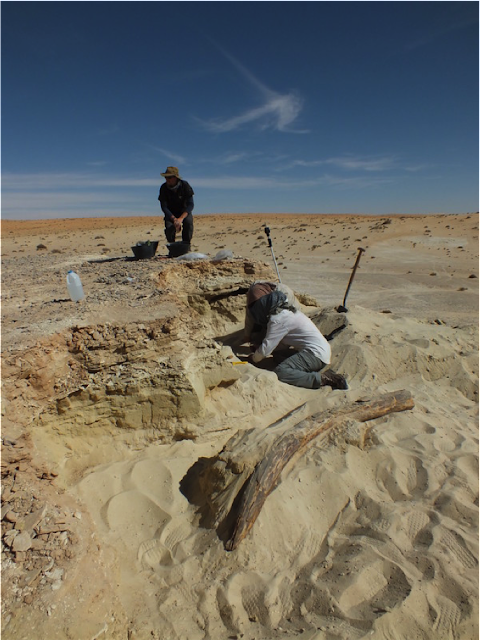 Fossil herbivore stable isotopes reveal Middle Pleistocene hominin palaeoenvironment in 'Green Arabia'