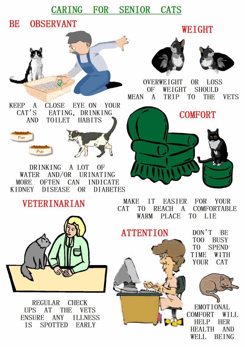poster on senior cat care tips