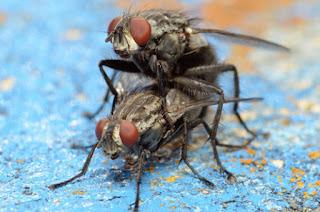 cara mengusir nyamuk lalat dan tikus dengan aplikasi android