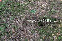 Налибокская пуща. Лесной Иерусалим. Следы работы черных копателей