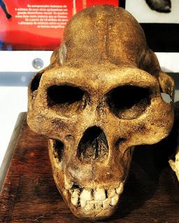 Reconstituição do crânio de hominídeo, Museu Ufologia, Itaara (RS)