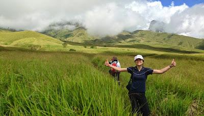 Savanna Grass Tall at Sembalun Lawang altitude 1500 m National Park Mount Rinjani