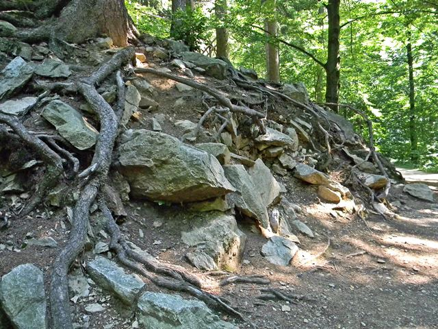 skały, las, Międzygórze, turystyka