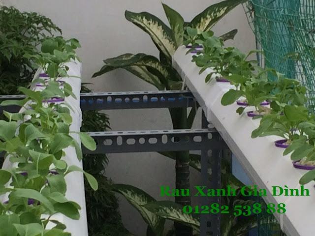 thi công lắp đặt giàn rau thủy canh tại tphcm - Thi công hệ thống thủy canh hồi lưu tại quận 5