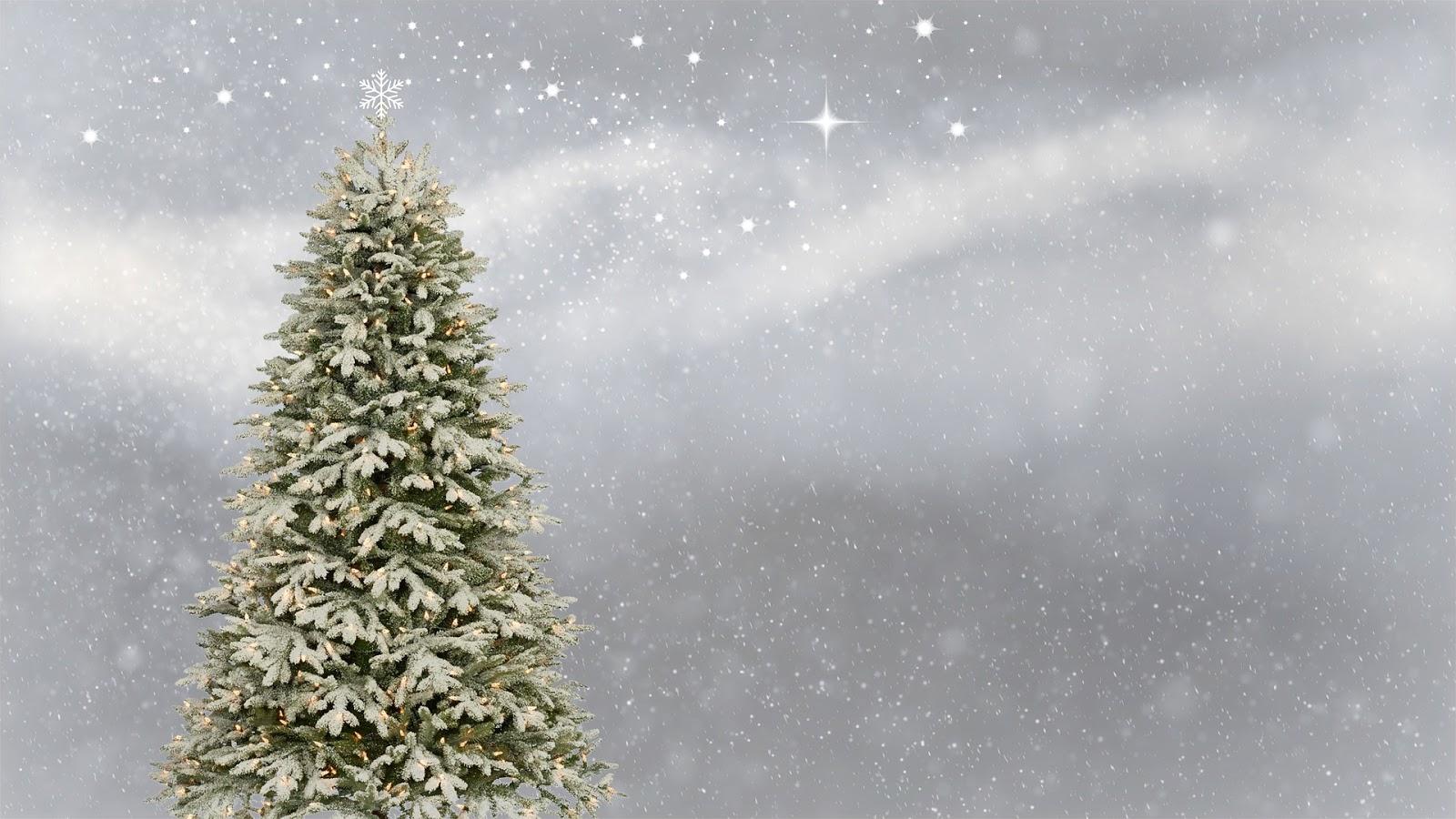Weihnachtsbaum Künstlich Beleuchtet.Weißer Weihnachtsbaum Mit Beleuchtung Test Die Meisten Sind Eine