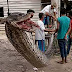 'Unbelievably huge' python fried for feast after fight with villagers in Indonesia