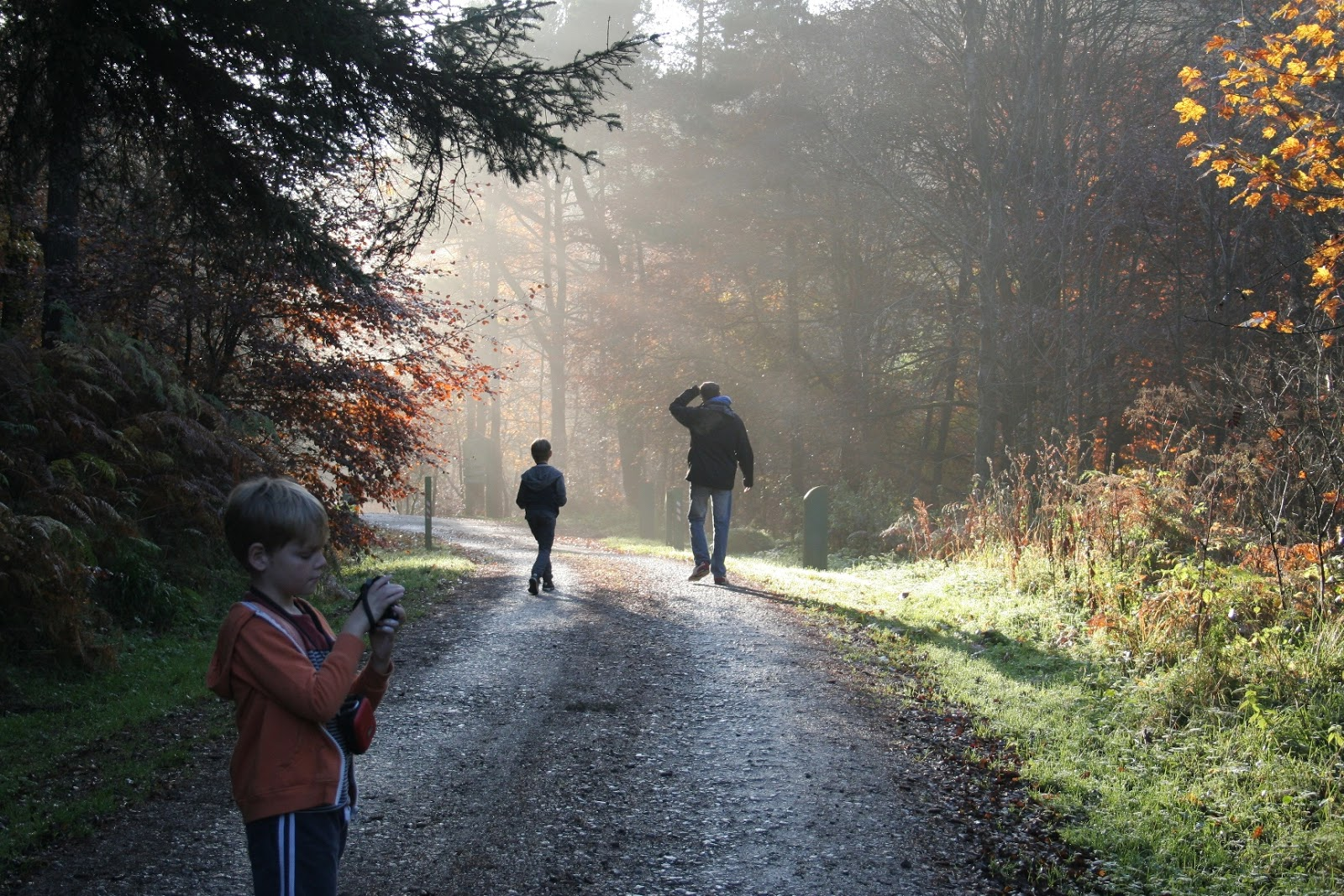 What's On for Kids & Families in Durham | February Half Term 2017 | A Guest Post by My Boys Club | Hamsterley Forest