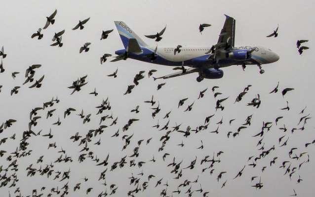 ڈی جی اے اے نے ایئر لائنز سے بڑھتی ہوئی ہوائی اڈوں کو کنٹرول کرنے کے لئے پروازوں کی دستیابی میں اضافہ کرنے سے مطالبہ کیا ہے