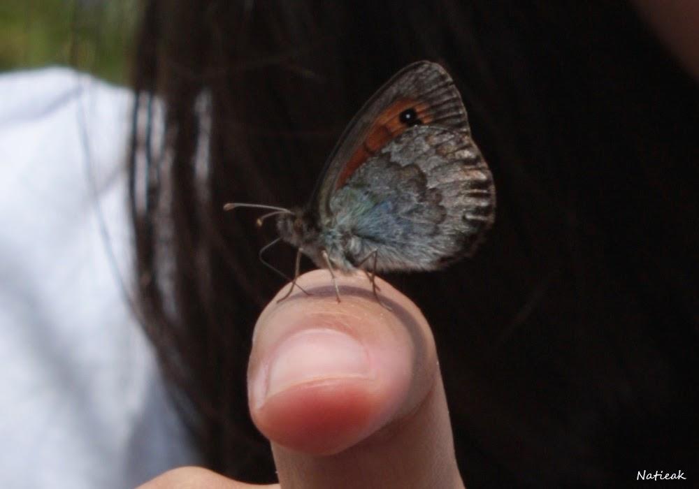 Aussois  refuge de la Fournache papillon