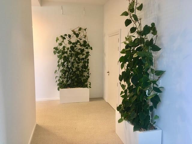 Plantenwand of plantenmuur met weinig onderhoud. Prijzen op aanvraag.